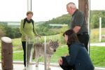 Wild creatures – very close to a wolf Caption: Three visitors look at a prepared wolf in a glass case